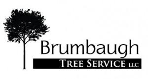 Brumbaugh-Tree-Service-Logo-300x161