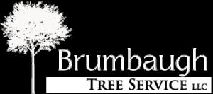 WHITE-Brumbaugh-Tree-Service-Logo-300x133